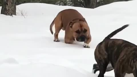 Dogs humorously struggle to scale icy hill