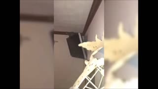 Squirrel causes panic and destruction inside family home - Video