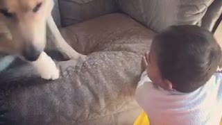 Lazy dog doesn't want to play with little brother