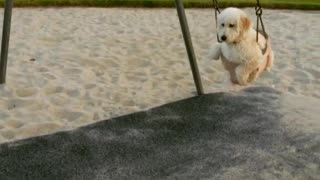 Pooch Plays at the Park