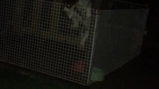 Glowing eyes puppy jumps out of white cage at night - Video