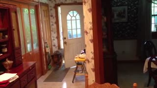 Amazing dog can open and close doors! - Video