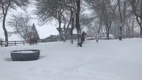 Horses Frolic and Play in the Snow