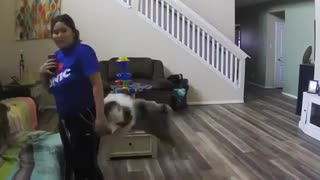 Jealous pup knocks over owner when she pets other dog