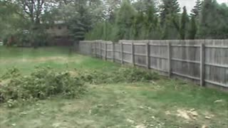 Fallen Tree Breaks a Fence - Video