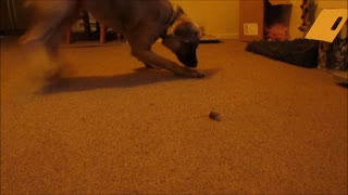 Puppy Meets Bug For The First Time - Video