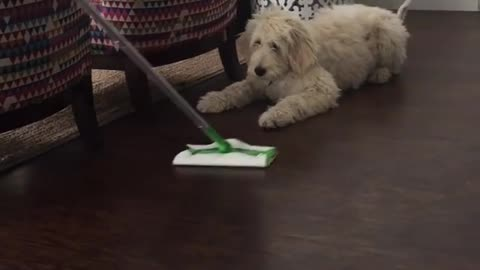 Dog confuses cleaning product for playtime fun