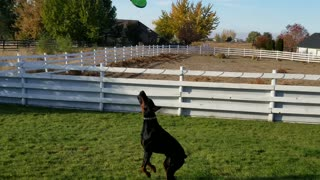 "Amadeus getting better at ""flying""!"