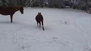 Snow!! Horses enjoying our first snowfall