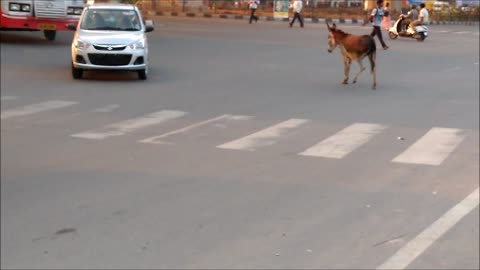 Donkey Struggles to cross a busy road.