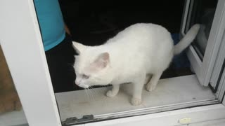 The white cat went out to the window.
