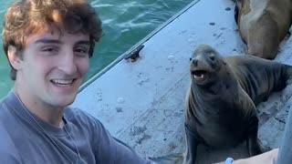Lining Up a Photo Op with Sea Lion