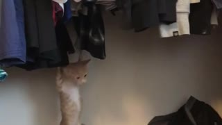Cat gets claws stuck in clothing  - Video