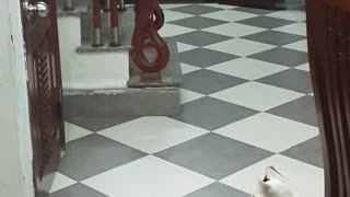 Cats are Smart - Video