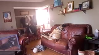 Dog caught on Nanny Cam sitting like a person  - Video