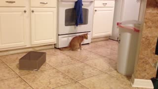 Cat desperately tries to catch own tail - Video