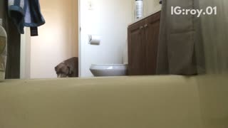 Dog showers by himself