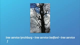 tree service forest - Video