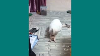 Funny Cat| Mother cats protecting their cute kittens