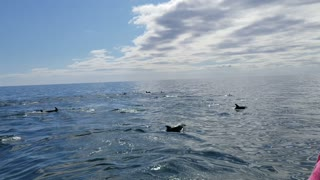 Dolphins During Boat Tour