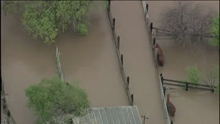 Horses Trapped In Contaminated San Jose Flood Water - Video