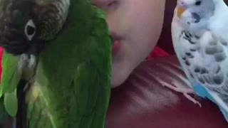 A boy and his birds  - Video