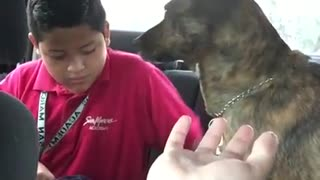 Sweet Dog Cries Every Time Mom Drops Son Off To School - Video