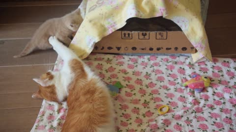 Mom Cat Pino and her Lovely Kittens, See and Enjoy Playing