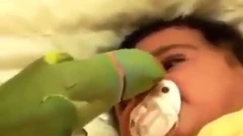 Baby And Parrot
