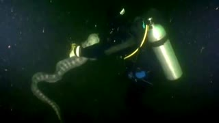 Scuba Diver Swims With World's Largest Wolf Eel