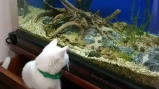 Lovable cats for aquarium keepers - Video