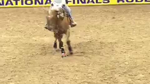 Just A Little Boy And His Daddy Riding A Horse – It Doesn't Get Much Cuter Than This!