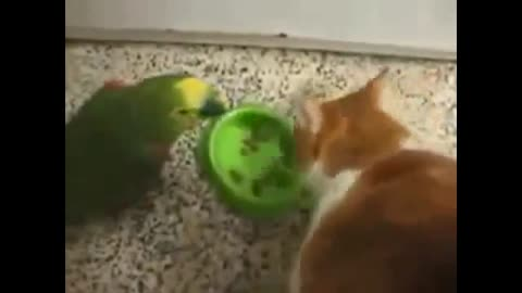 NEW Funny Animal cat And parot War For Food - FUNNY ANIMAL . HQ
