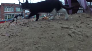 Found footage unveils chilling images of cats hunting
