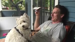 Westie dog adorably gives kisses on command - Video