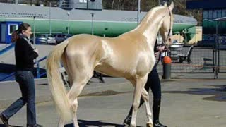 (VIDEO) Nothing Like We've Ever Seen Before – Must Watch This Rare Horse! - Video