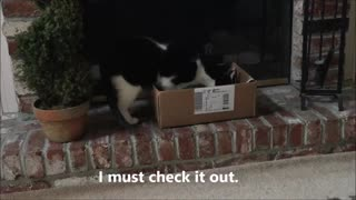 Cat Wants New Job  - Video