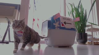 Adorable cats remind everyone that voting is easy! - Video