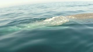 Paddle Boarder's Close Encounter With A Blue Whale - Video