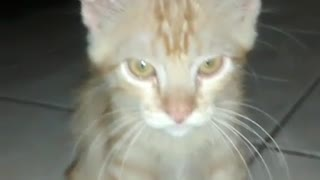my cat trying to catch the light - Video