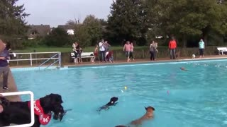 Doggies have much fun in an outdoor pool - Video