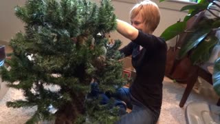 "Blind kitten ""helps"" decorate Christmas tree"