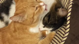 Lovely Cat and cat - Video