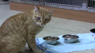 Cat receives eye surgery thanks to Facebook fans - Video