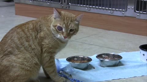 Cat receives eye surgery thanks to Facebook fans
