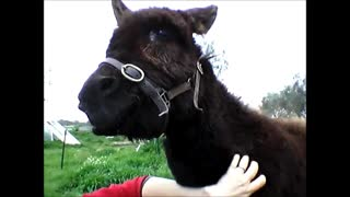 Little Donkey Hope Pulls Some Funny Faces  - Video