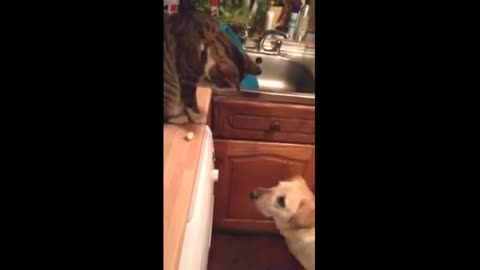 Cat decides to feed the family dog some popcorn