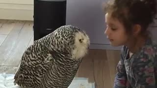 The Wonderful Friend of Little Girl and Owl