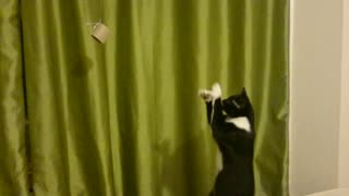 Cat tries to catch dangling object too far away - Video