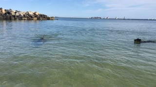 Dog and Dolphin Playing Together - Video